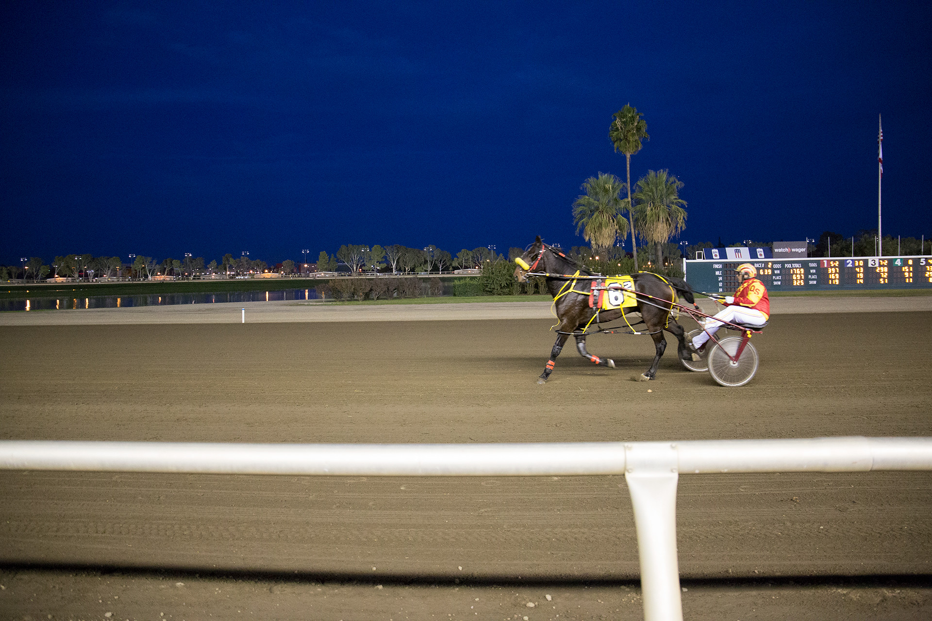 Night time harness racing. Single Racer