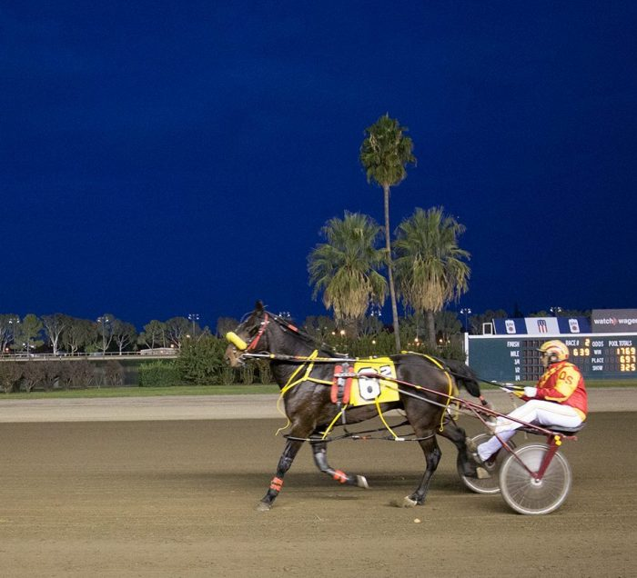 Night Time Harness Racing