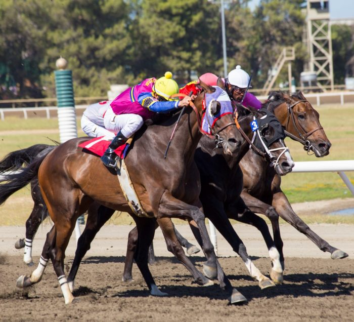 Horse Racing 01 at Miller Lite Grandstands - approved for media use