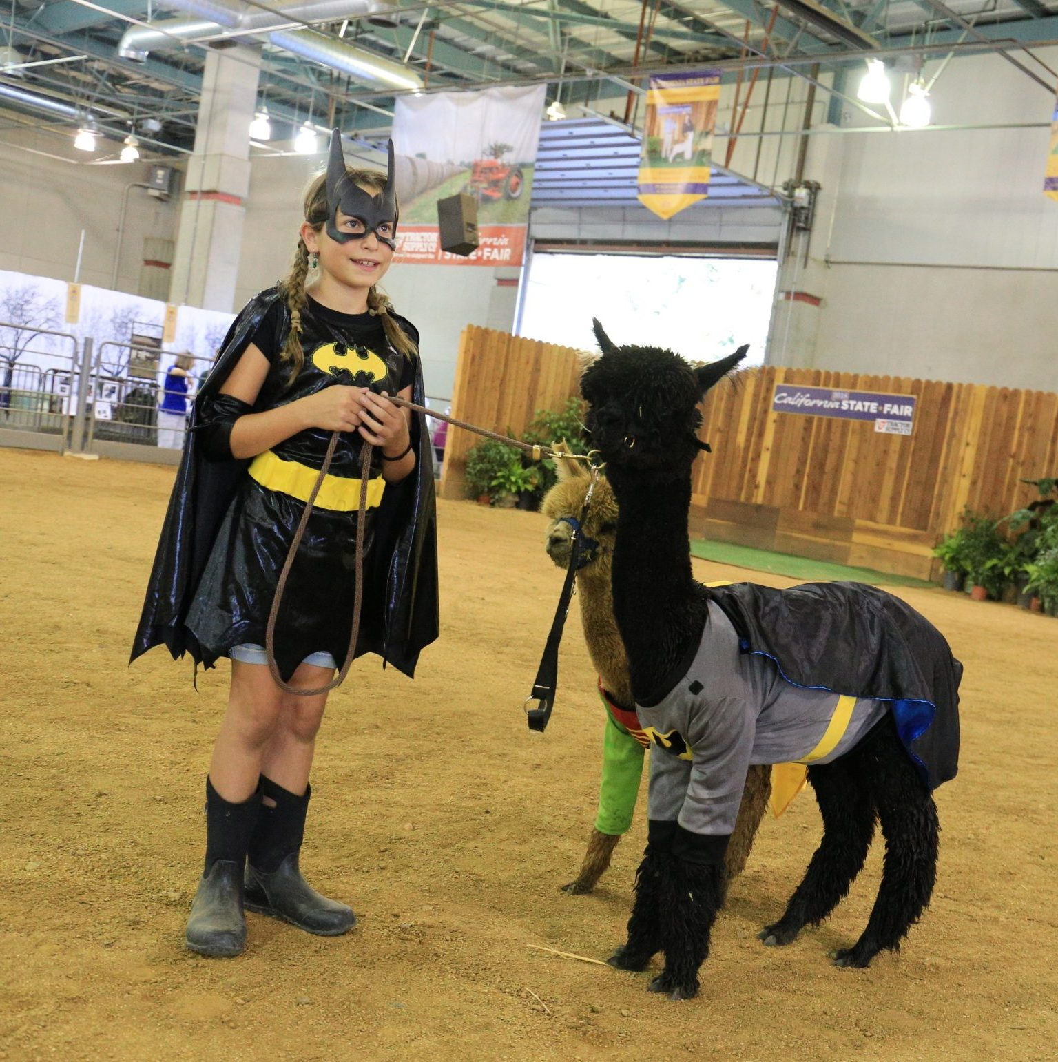 Alpaca and llama dressed up as bat man and robin with girl in bat man outfit