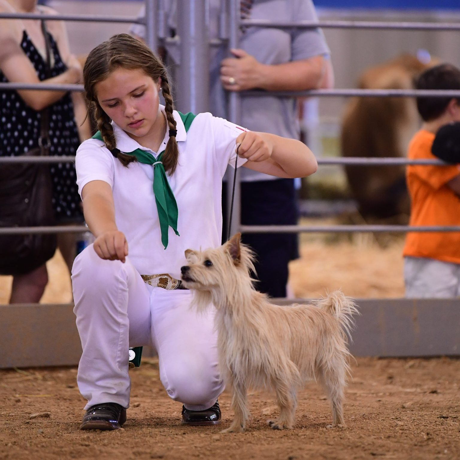 dog and person at dog show