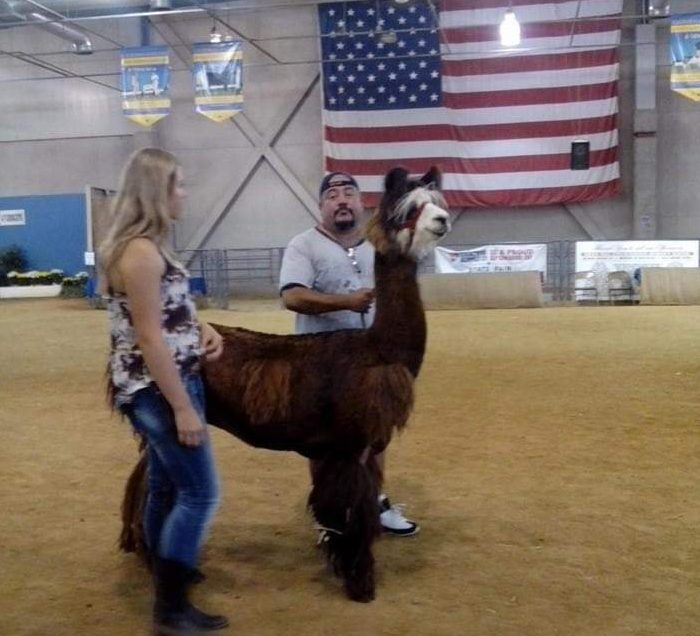 two people standing with a llama