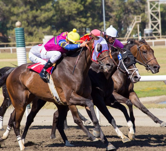 Horse Racing at Miller Lite Grandstand Simulcast Satellite Wagering Horse Racing