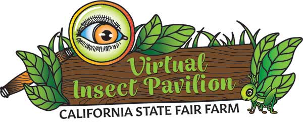 Virtual Insect Pavilion Logo