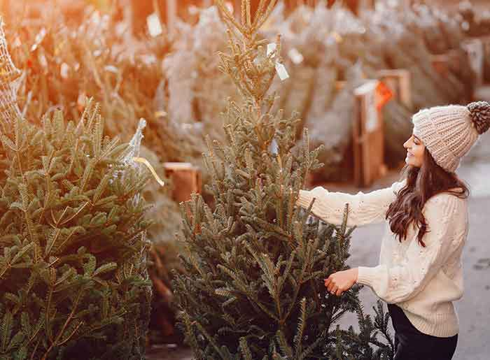 Brunette lady in a white sweater with Christmas tree Stock Photo - 131803674Visual Search Cute brunette in a white sweater with Christmas tree and many christmas trees out of focus in the background