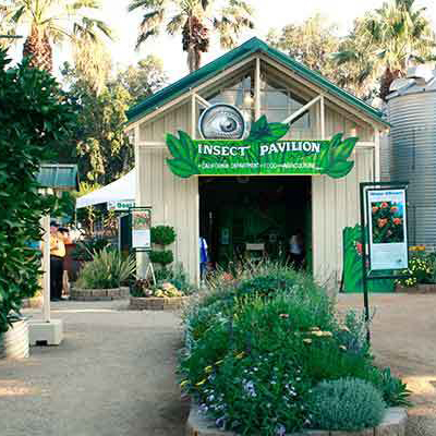 Insect Pavilion at CA State Fair